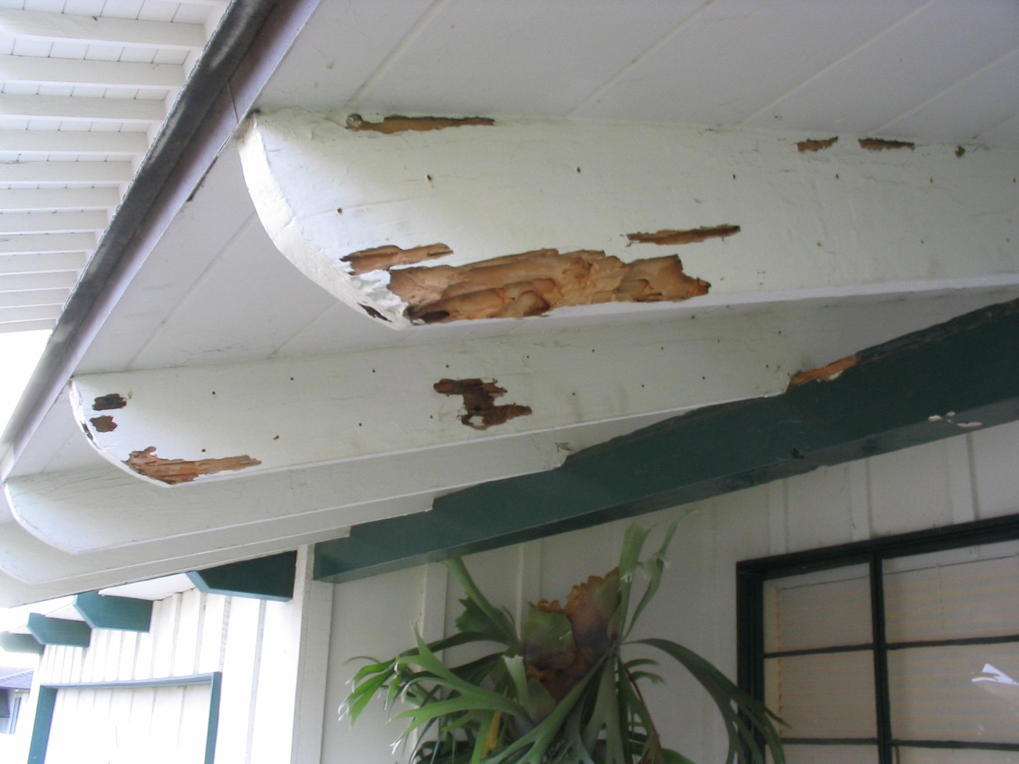 Termites Treatment Repair Albuquerque Rio Rancho