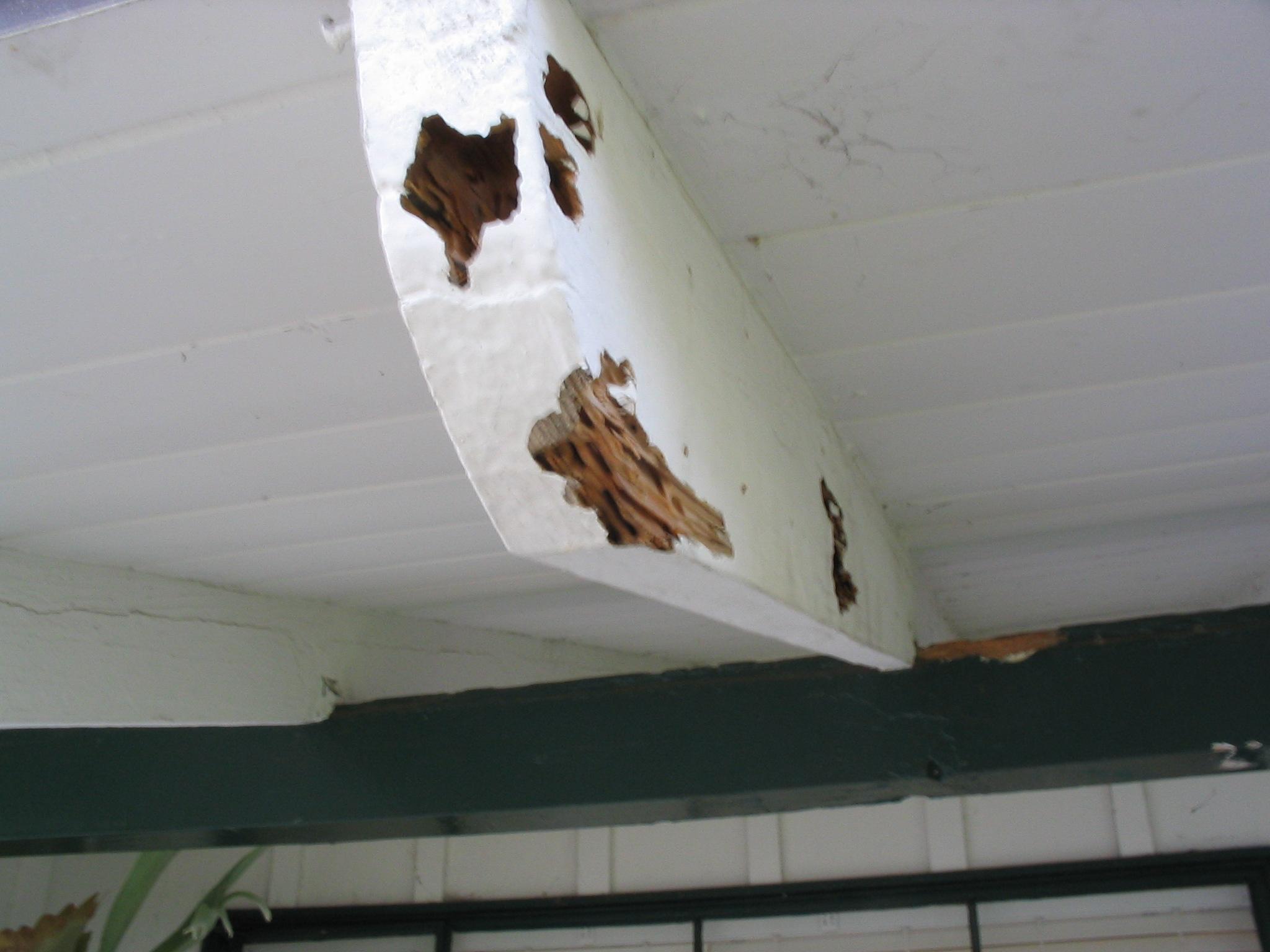 Drywood Termites In Albuquerque Rio Rancho Placitas